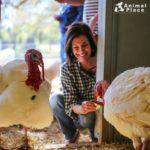 animalplace-thankturkeys01