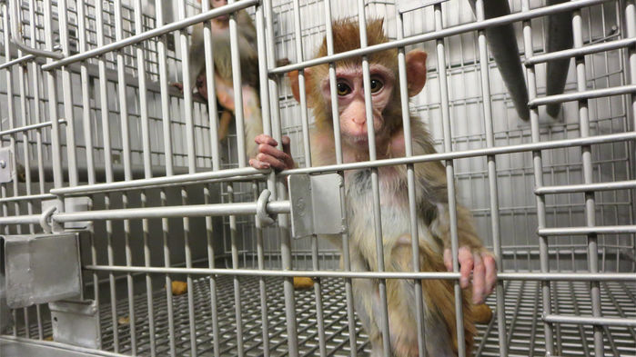 cc_pcases_monkey_dealer_investigation_2015_006_16x9