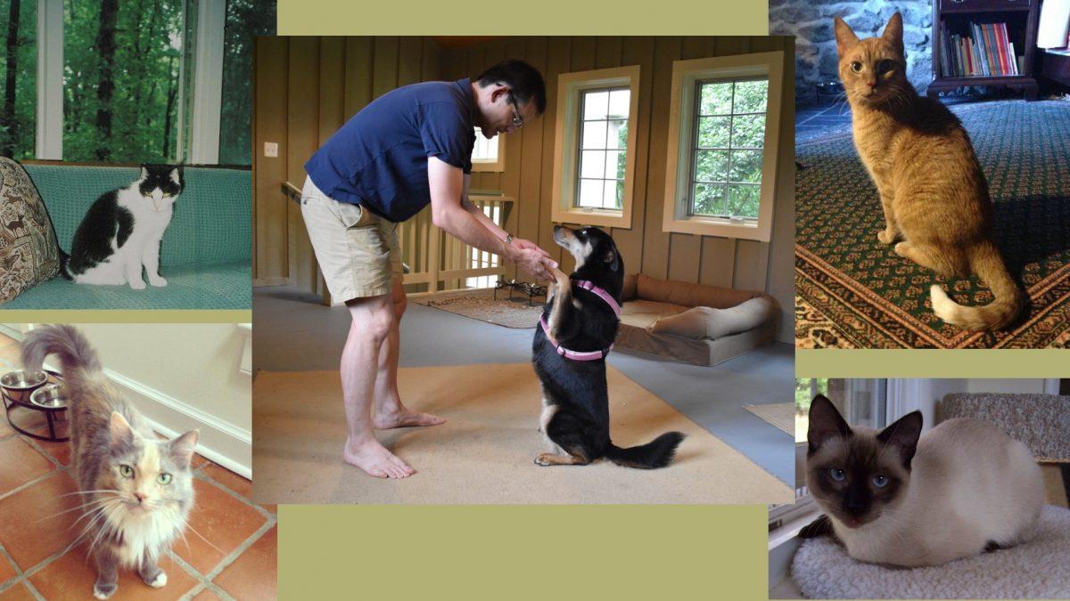 VA Rescued Animals part 1