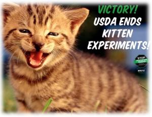 USDA Kitten Victory Soft