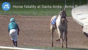PETAs-campaign-to-end-racehorse-cruelty