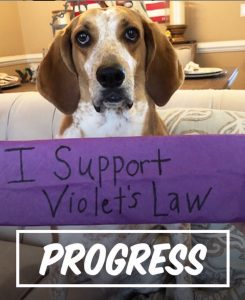 WCW-Violets-Law