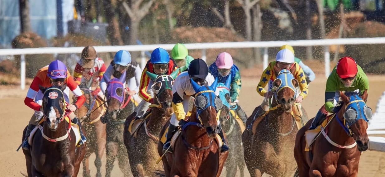 PETA-Horserace-Image