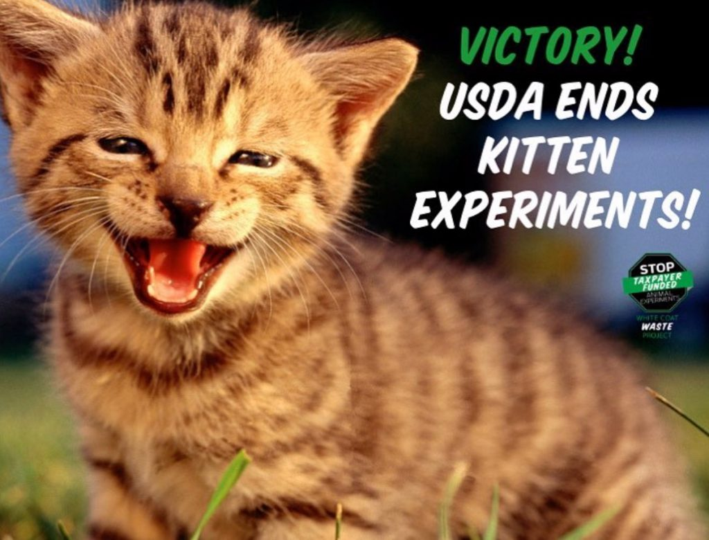 Victory USDA Ends Kitten Experiments