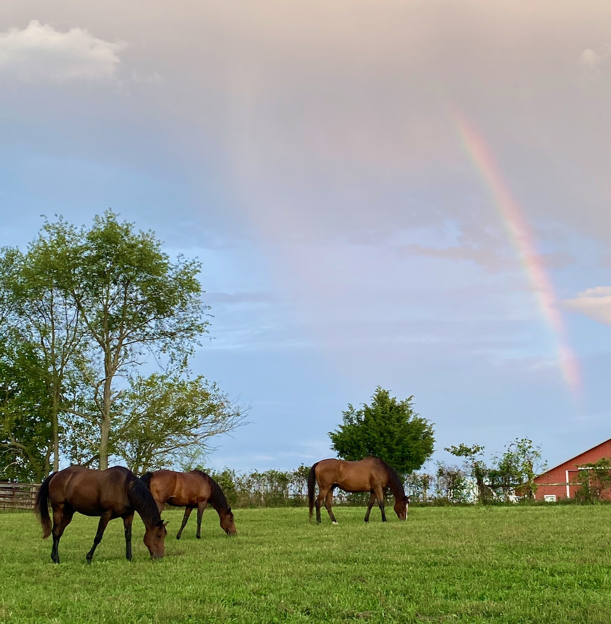 Charlie-with-herd-and-rainbow-11-Sep-2020