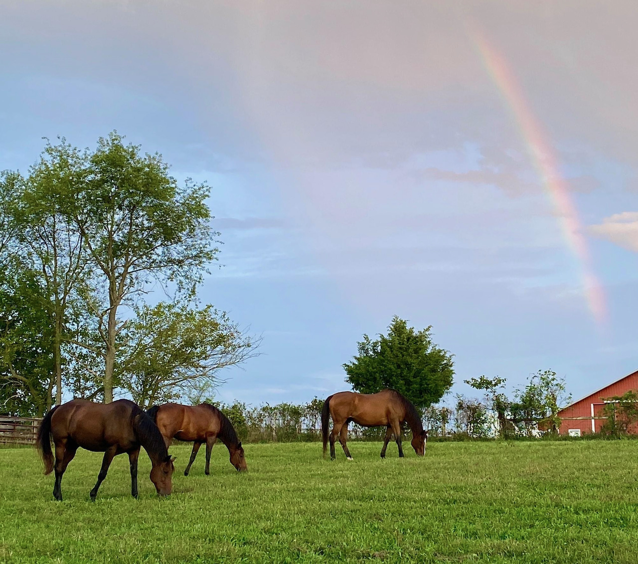 Horses and Rainbow - Sept 2020